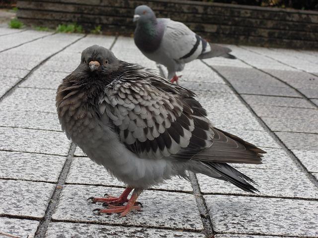 Jak pozbyć się pierzastych szkodników – kolce na ptaki