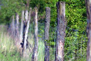 Nowe siatki w lesie