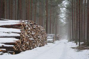 Uprawnienia niezbędne do wycinania drzew – energetyczne i inne