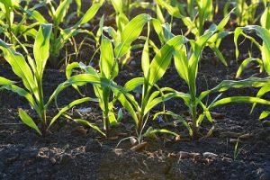 Nowoczesne technologie w produkcji rolnej