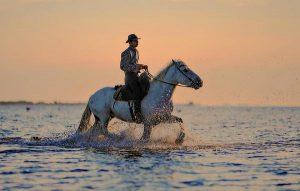 Akcesoria niezbędne do jazdy konnej