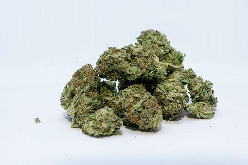 Jak działa medyczna marihuana?