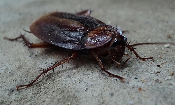Efektywne zwalczanie insektów